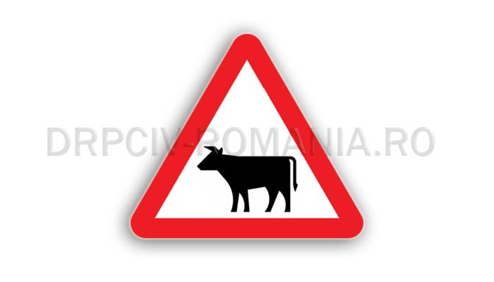 DRPCIV - Animale